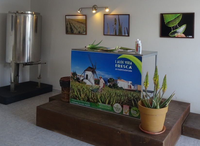 aloe vera shop and museum of la oliva