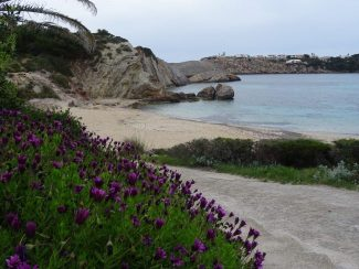 menorcan flowers beach and cove