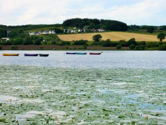 boats and lily pads at lochwinnoch rspb wetlands site scotland