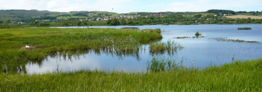 lochwinnoch wetlands and birds rspb site scotland