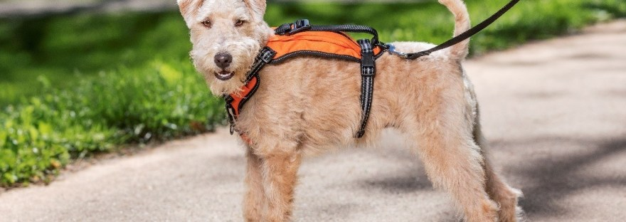 dog safety harness for outdoors and road trips