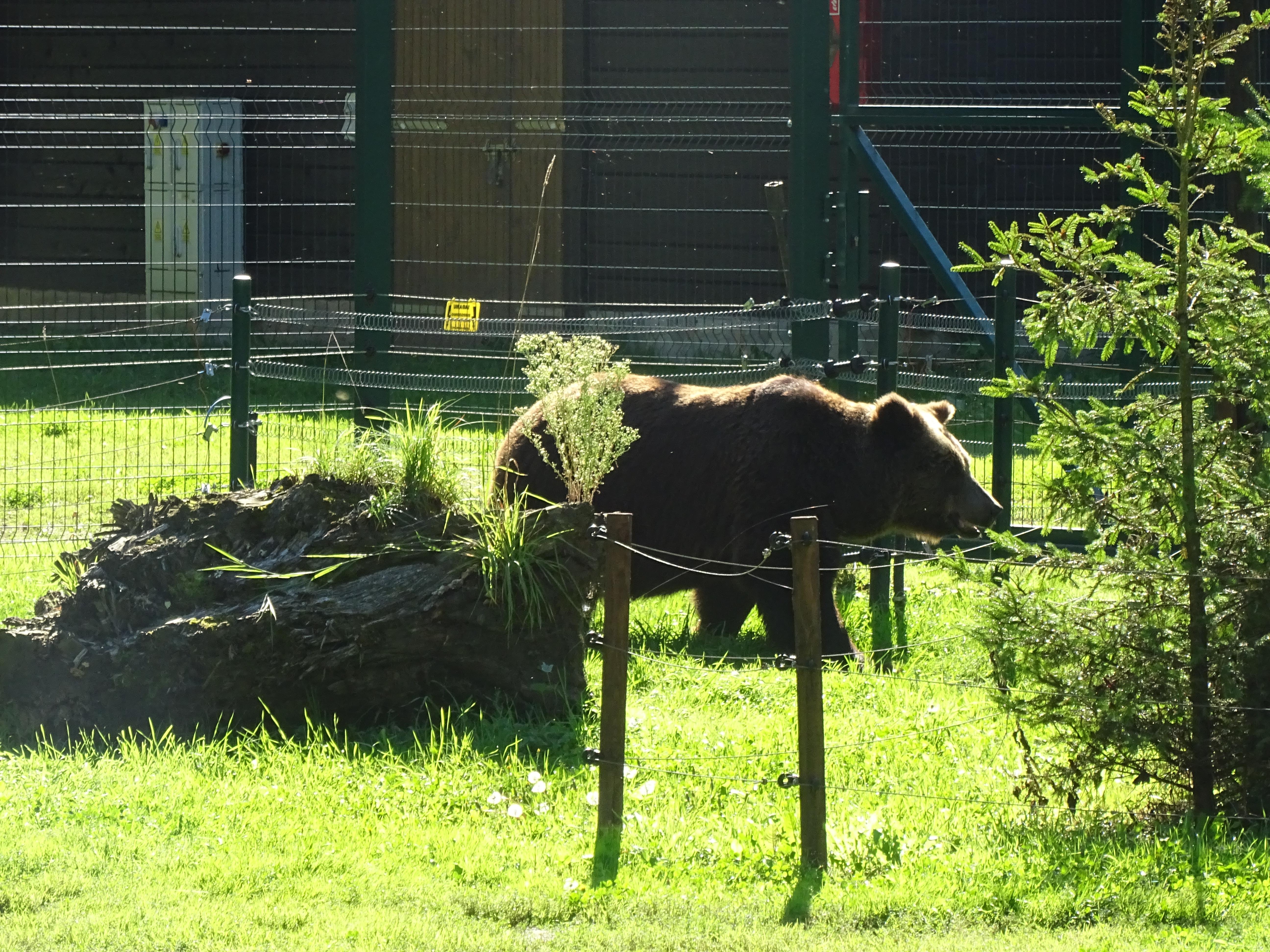 bear akcent zoo zwierzyniecki park bialystok poland