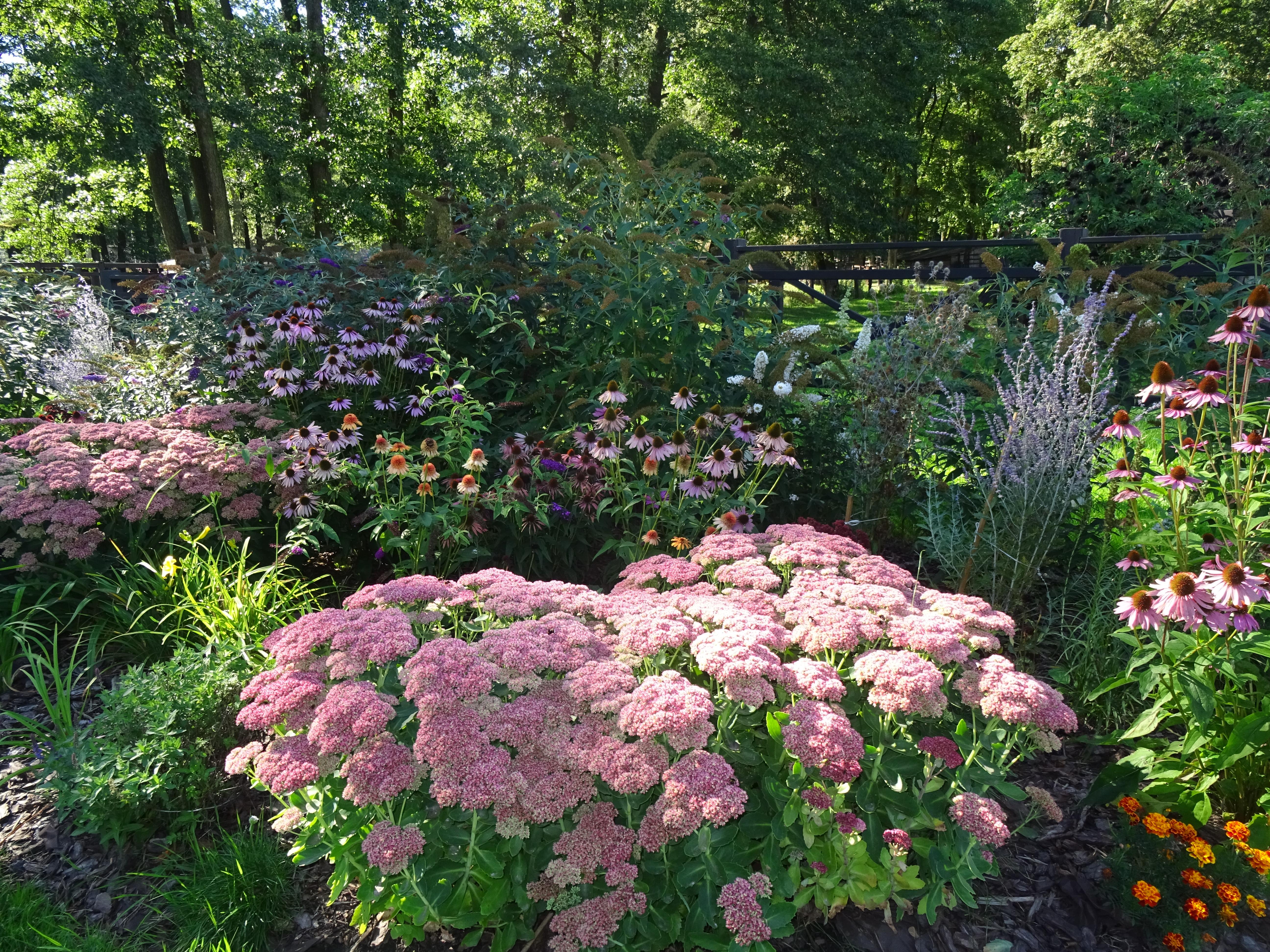 flowers akcent zoo zwierzyniecki park bialystok poland