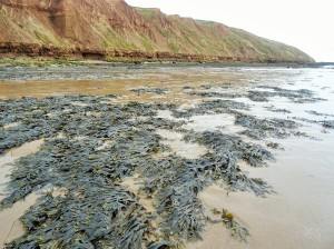 the beach and cliffs at filey in yorkshire