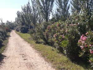 walking paths lined with flowers at parc torre d en dolca
