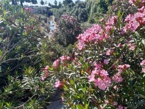 flowers and river at parc d en dolca