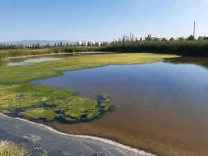 artificial wetlands at parc torre d en dolca