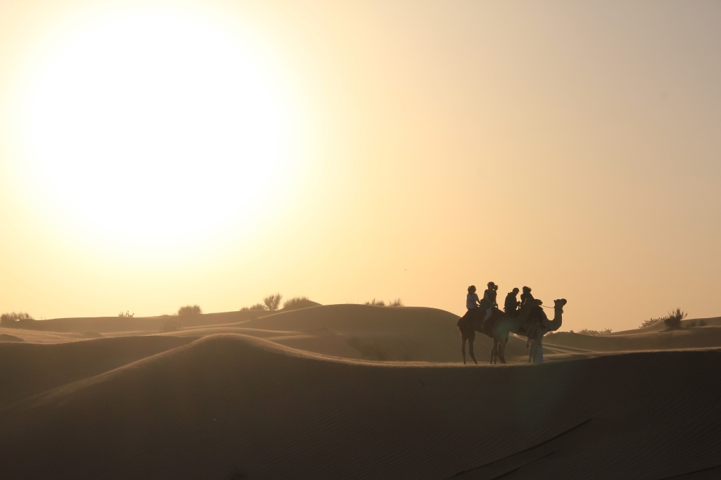 camel riding and the sun set of the dubai desert